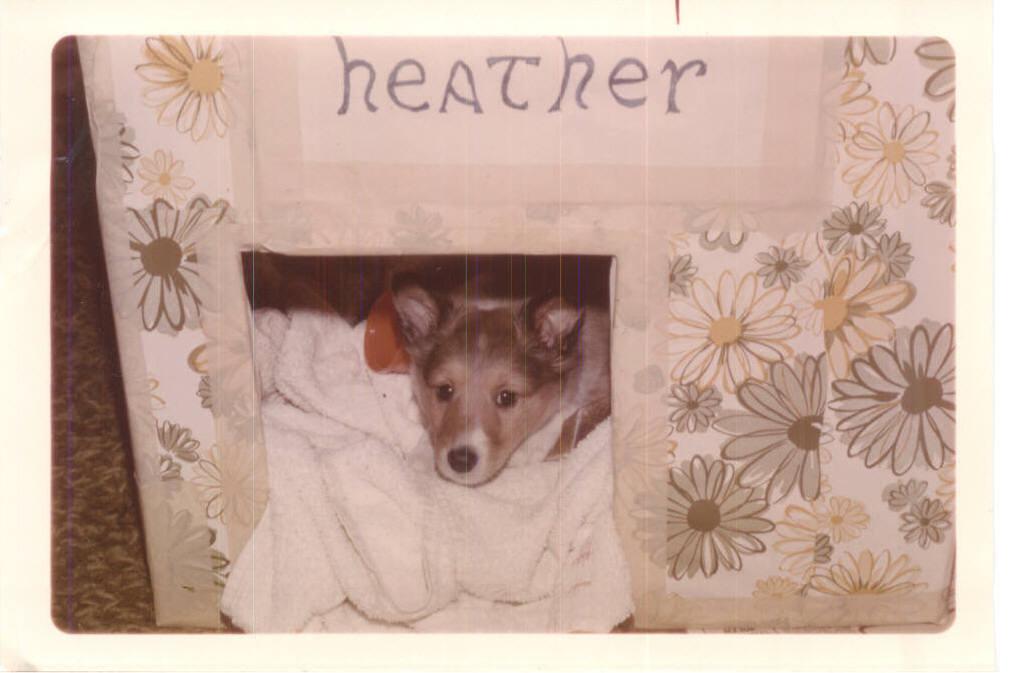 Puppy Heather - pre-crate days
