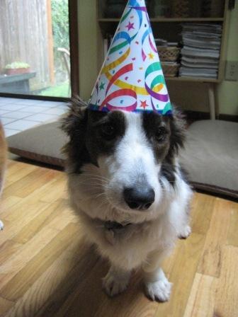 Cosmos birthday